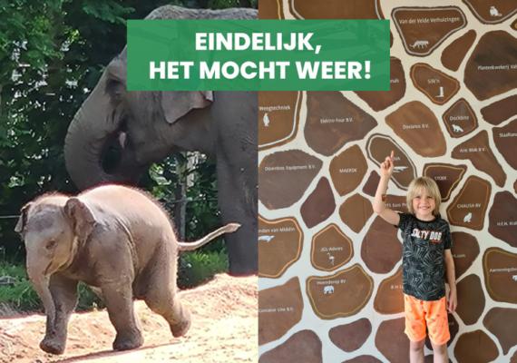 Gezinsdag Diergaarde Blijdorp voor medewerkers van Mondial Van der Velde Verhuizingen!